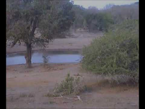 Lion Nyala Kill at Tembe 7-8-12