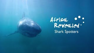 South African Ocean Lovers Protect Humans, Sharks From Each Other