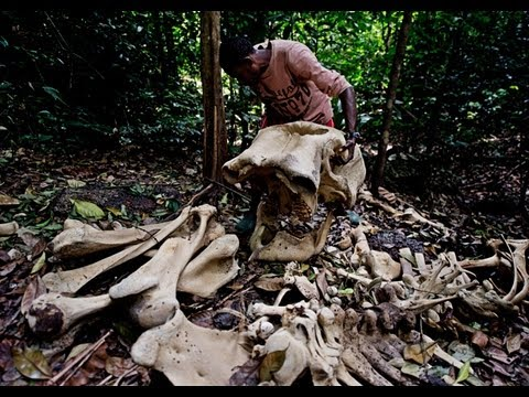 Stop Wildlife Crime: The Series | Trailer