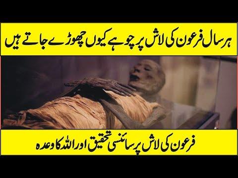 Latest Scientific Research On Body of Firon In Urdu Hindi