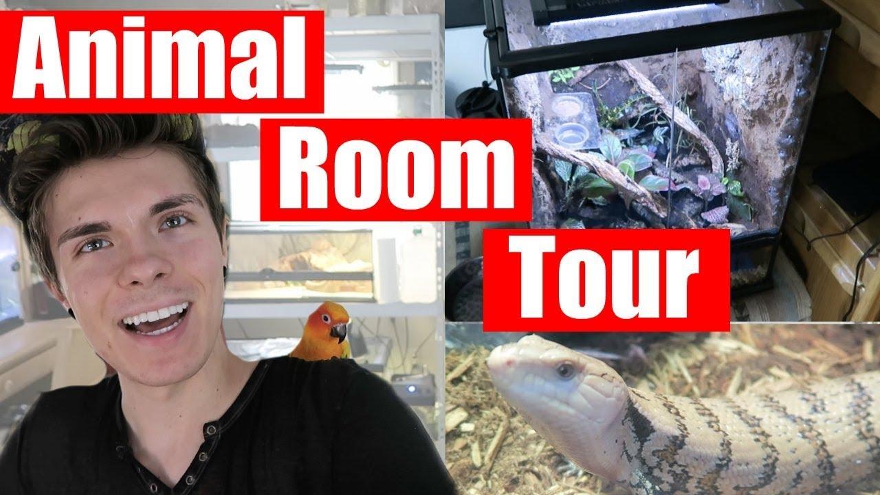 animal-room-tour-reptiles-aquatics-10-animals-in-my-room