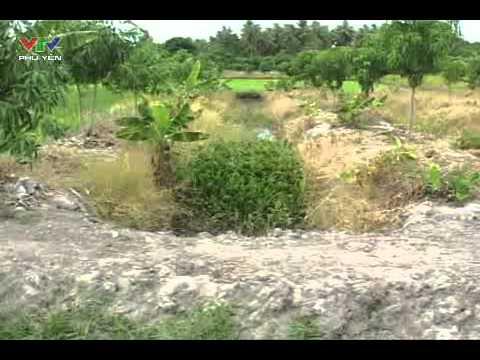Chuyện làm giàu của nhà nông - Làm giàu trên vùng đất cát