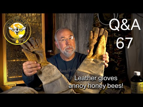 Backyard Beekeeping Questions Answered 67 Why Bees Sting Your Hands And More. Flow Super Not Used?