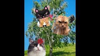 Коты дерутся из-за кошки! Смотреть всем