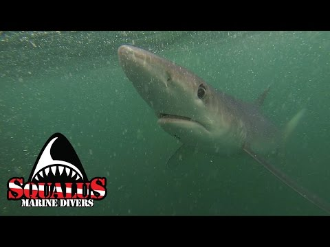 NARRAGANSETT SHARK CAGE DIVE - SQUALUS MARINE DIVERS