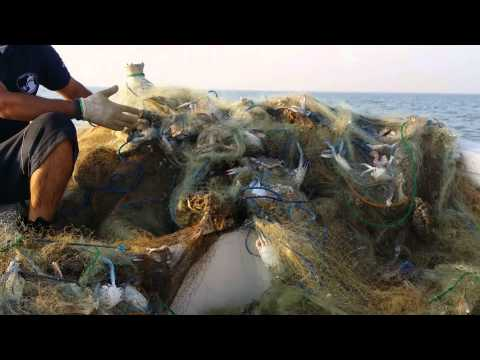 Kuwait divers lift disposable fishing nets on Island