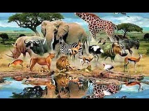اشرس معركه بين حيوانات الغابه ادخل وشوف بنفسك Youtube