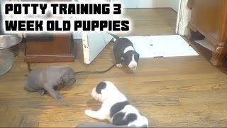 How To - Potty Training Puppies