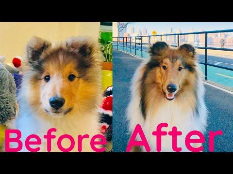 Puppy after 12 months