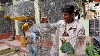 New Colony Cages Setup For Finches Amazon Parrot & Monk /  How To Setup Birds Colony Cages Tips.