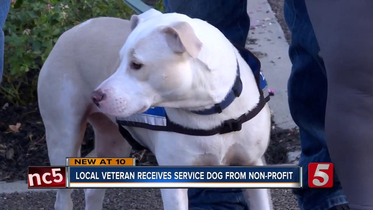 Ptsd Service Dog Australia