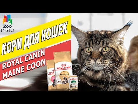 Корм для кошек Мейн-Кун Роял Канин | Обзор корма для котов | Royal Canin Maine Coon review