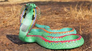 12 Most Beautiful Snakes in the World
