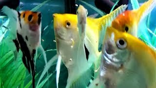 Feeding your fish - How much to feed your fish, how many times to feed and what to feed your fish