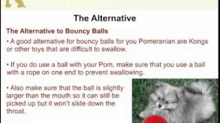 Toys That Can Be Dangerous For A Pomeranian