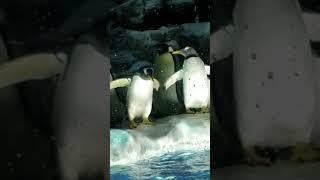 ペンギンかわいい https://www.google.co.jp/