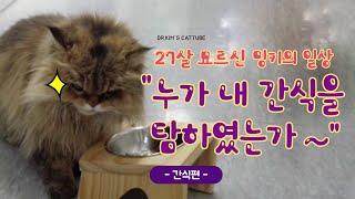 [캣튜브]27살 장수묘 밍키의 일상 생활 -간식편- 누…