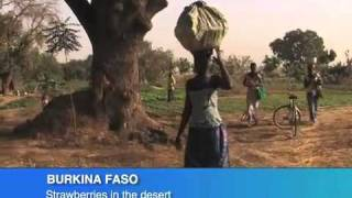 STRAWBERRIES IN THE DESERT {BURKINA FASO}