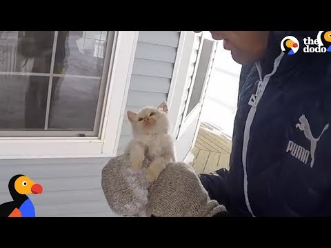 Kitten Frozen Solid Brought Back To Life by Family | The Dodo - YouTube