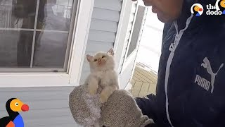 Kitten Frozen Solid Brought Back To Life by Family | The Dodo thumbnail