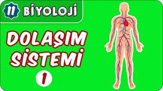 Dolaşım Sistemi-1  11.Sınıf Biyoloji