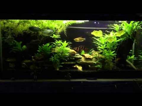 PH And Water Changes: How Much And How Often