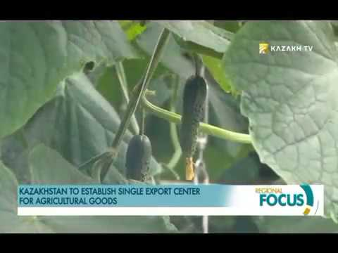 Kazakhstan to establish single export center for agricultural goods