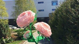 Ростовой цветок. Розовое облако.