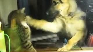 Полный ржач, тяжела жизнь кота и не сладка, лучшие приколы над животными 2014 июнь