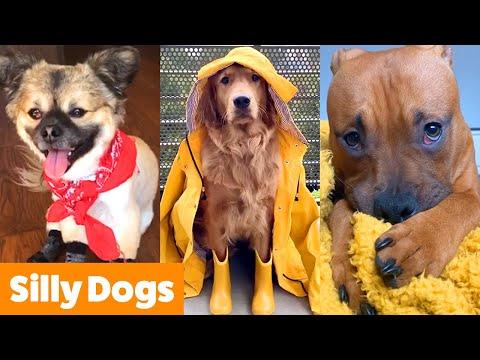 Silliest Cute Dogs | Funny Pet Videos