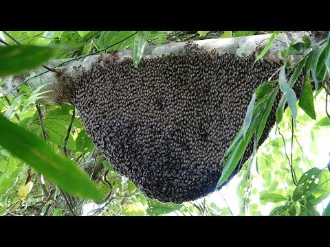 Wilderness survival, episode 4, trapping squirrels and eat honey bees