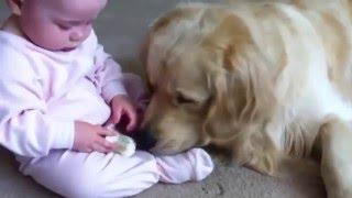 最高に癒される!赤ちゃんに何をされても怒らない犬