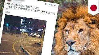 デマ投稿で全国初の逮捕! 熊本地震発生直後に、ツイッター上に「ライオ...