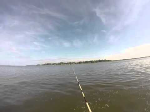 Catching a few small bluefish on Potomac River near Coles Point, VA