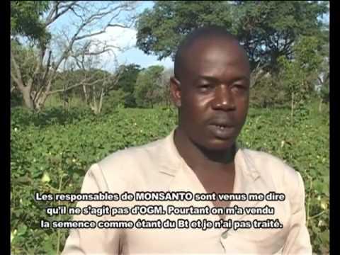 Le coton Bt au Burkina Faso : la moisson des désillusions
