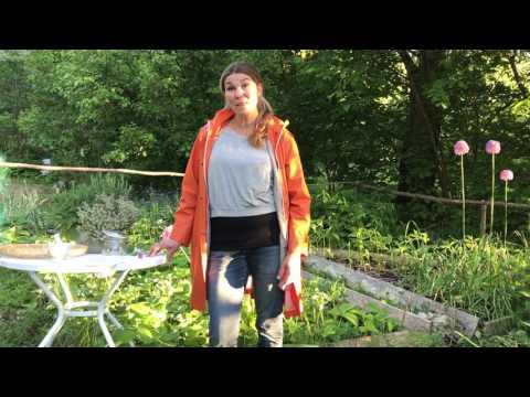 Örtsalt snabbaste och godaste varianten -gör så här enkelt av örterna på balkongen eller trädgården