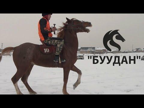 """""""БУУДАН"""" МЫКТЫ АРГЫМАК ЭКЕН / Тулпар KG"""