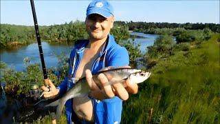 Ночевка на берегу реки Припять Новая палатка Рыбалка уха шашлыки
