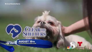 Clear the Shelters PSA