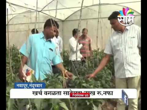 Agrowon: Nanadurbar based 14 farmer's modern farming