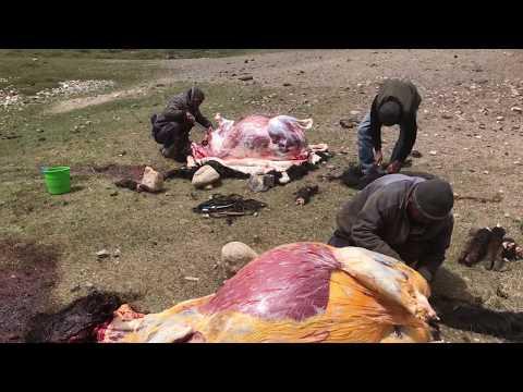 Забой яков в Мургабе и собаки Кыргызов Памира