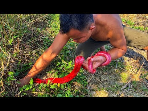Catch brave giant red snakes with primitive survival skills