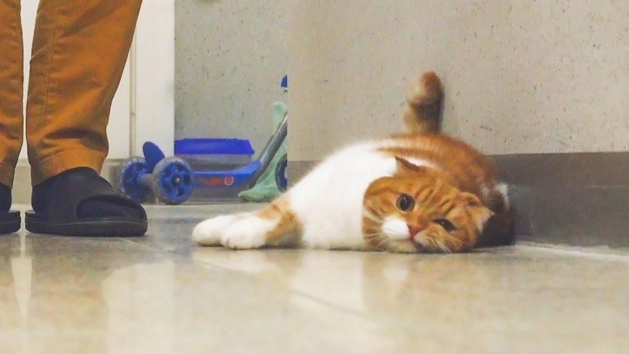 아빠-고양이-노을이-가출을-했다