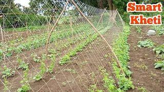 Smart kheti || बांस के मंडप से तैयार करने वाली खेती | Gourd farming cultivation,  vegetable, खेती