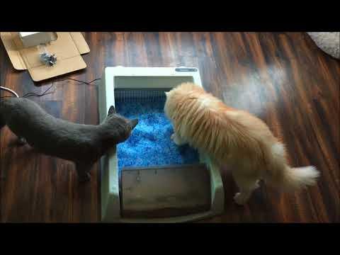 PetSafe ScoopFree Self Cleaning Litter Box Review