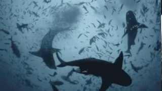 Eric Serra - Remembering A Heart Beat ( Le Grand Bleu ) ( The Big Blue )
