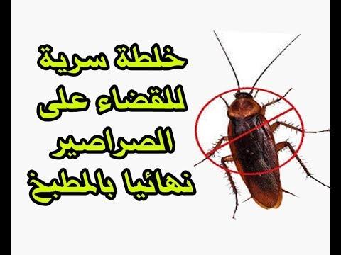 خلطة سرية للقضاء على الصراصير نهائيا بالمطبخ Youtube