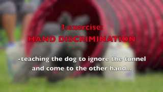 Dog Agility Exercises With A Tunnel-improving Speed, Focus, Turns And Discrimination