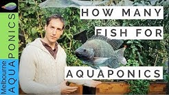How many fish for Aquaponics