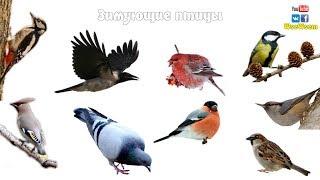 Зимующие птицы. Детям про птиц зимой.
